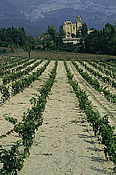 Vineyards at El Coto - Spain